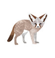 flat style of desert fennec vector image