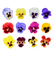 hand drawn pansy set vector image