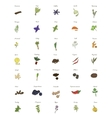 A large set of isolated herbs and spices for vector image