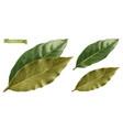 bay leaf 3d realistic
