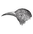 beak vintage