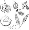 hops and malt set vector image