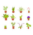 set green house plants in pots vector image vector image