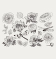 big set monochrome vintage flowers vector image vector image