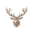 deer head emblem isolated on white background vector image vector image