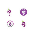 grape with leaf icon vector image vector image