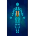 Polygonal anatomy of male muscular system Human vector image vector image