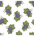 purple grapes pattern vector image vector image