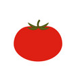 tomato vegetable natural vector image vector image