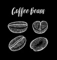 Coffee Bean vector image vector image