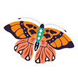 colorful hand drawn butterfly on white vector image vector image