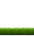 grass border isolated vector image