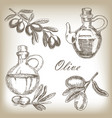 hand drawn olive vector image vector image