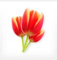 realistic flower tulip vector image vector image