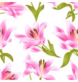 seamless texture pink lily lilium candidum vector image
