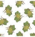 white grapes pattern vector image vector image