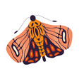 Colorful hand drawn moth on white background