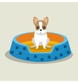 boston terrier puppy blue bed pet vector image