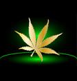 cannabis cannabis leaf vector image