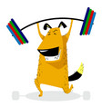 dog sporting with barbell pet pumping muscle vector image vector image