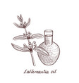 drawing lallemantia oil vector image vector image