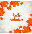 Hello Autumn design with maple leaf vector image vector image