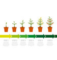 infographic plant growth stages tree vector image vector image