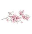 spring sakura flowers blossom art hand drawn vector image