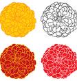 zinnia color vector image vector image