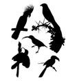 black birds silhouette vector image vector image