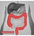 Body Internal Parts vector image vector image