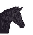 portrait of zebra drawing silhouette vector image vector image