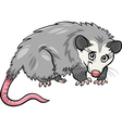 opossum animal cartoon vector image vector image