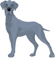 great danes dog vector image vector image