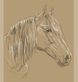 horse portrait-6 on brown background vector image