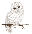 owl sitting on a twig vector image