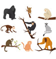 flat set of 9 species of monkeys wild vector image