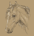 horse portrait-8 on brown background vector image vector image