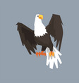 north american bald eagle symbol of usa vector image vector image