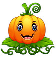 cartoon pumpkin with green leaves vector image