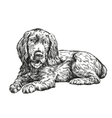 dog spaniel hand drawn illustration vector image vector image