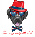 hipster dog breed Labrador Retriever vector image