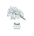 basil sketch hand drawing vector image