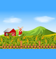 field of corn and red barn vector image
