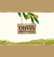 green olive label with realistic olive branch vector image