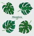 monstera leaf set vector image