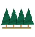pine tree forest white background vector image