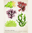 sea weed realistic collection vector image vector image