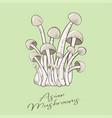 asian mushrooms enoki or shimeji vector image
