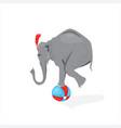 circus elephant standing on the ball vector image